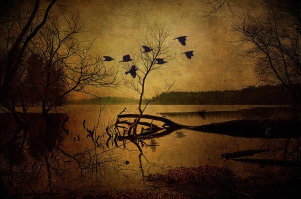 Photograph - Ethereal Autumn by Reynaldo Williams
