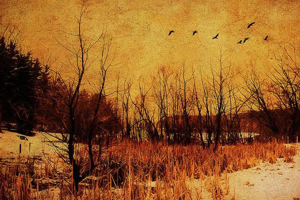 Photograph - Loch Raven Reservoir Treeline by Reynaldo Williams