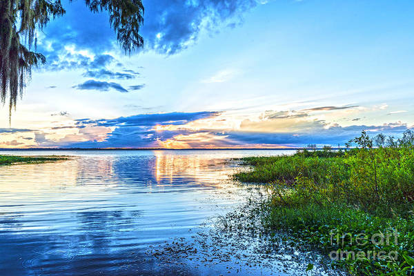 Photograph - Lochloosa Lake by Anthony Baatz