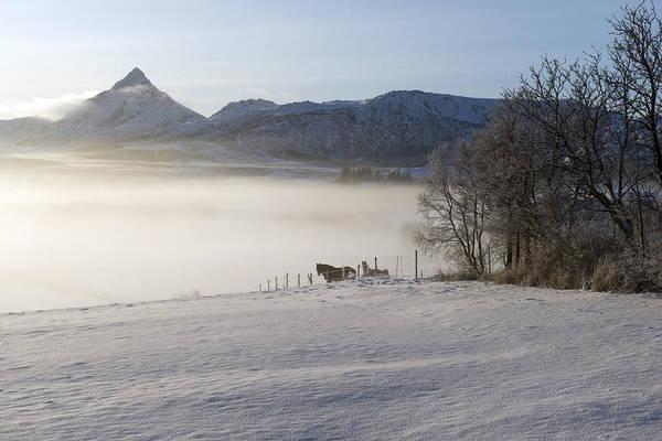 Photograph - Lofoten, Nordland 1 by Dubi Roman