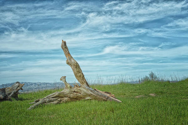 Photograph - Log And Clouds by Peter Dyke