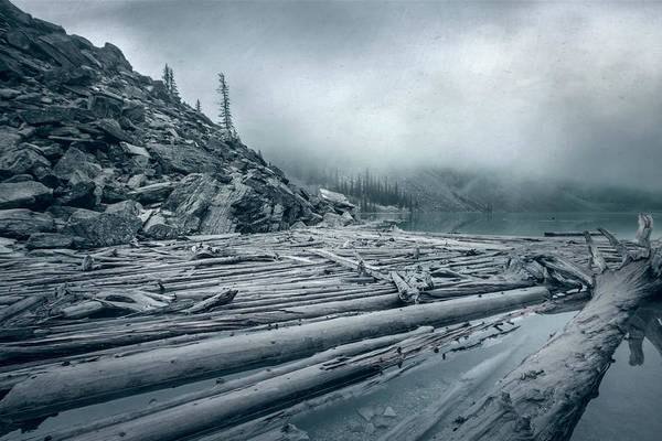 Photograph - Log Jam At Moraine Lake Banff National Park Canada Monochrome by Joan Carroll