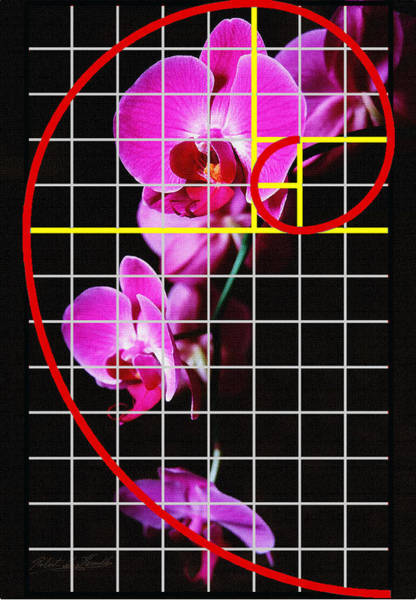 Photograph - Log Spiral Orchid by Robert G Kernodle