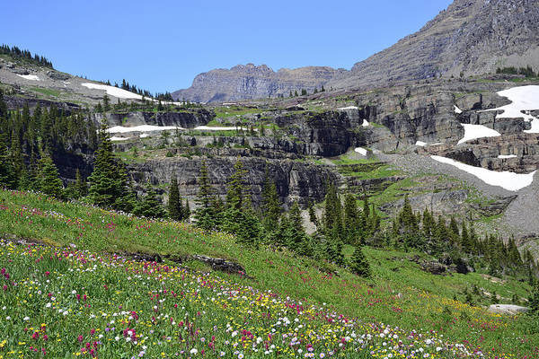 Photograph - Logan Pass Wildflowers In Glacier National Park 1.1 by Bruce Gourley