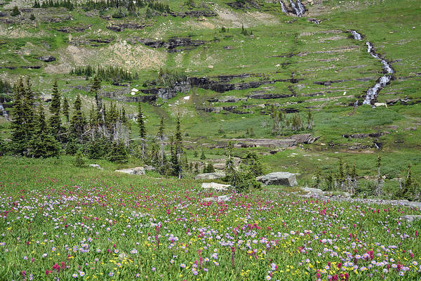 Photograph - Logan Pass Wildflowers In Glacier National Park 1.2 by Bruce Gourley