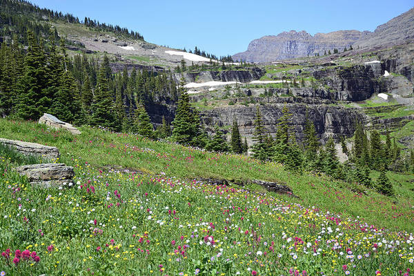 Photograph - Logan Pass Wildflowers In Glacier National Park by Bruce Gourley