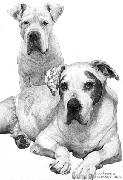Pup Drawing - Lola And Pomona by Lorraine Zaloom