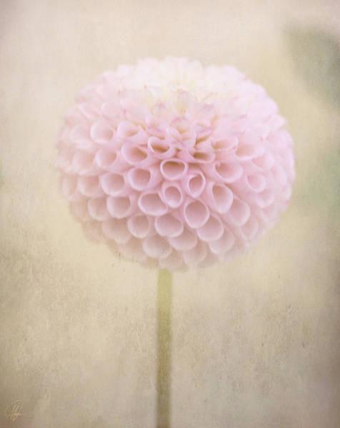 Wall Art - Digital Art - Lollipop by Margaret Hormann Bfa