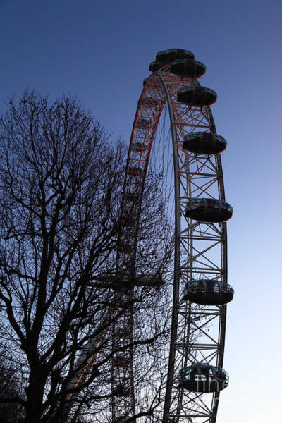 Photograph - London Eye And Winter Tree At Sunset by James Brunker