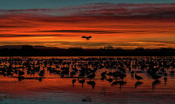 Wall Art - Photograph - Early Arrival - Bosque Del Apache by SharaLee Art