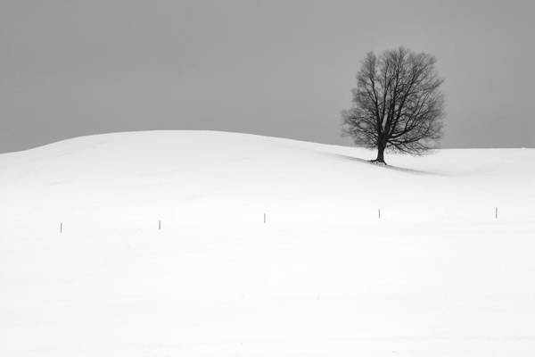 Photograph - Lone Barren Tree In Winter by Randall Nyhof