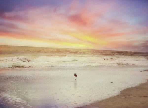 Photograph - Lone Bird At Sunset by Sue Collura