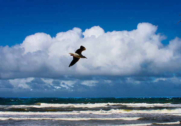 Photograph - Lone Bird Over Surfer's Paradise by Susan Vineyard
