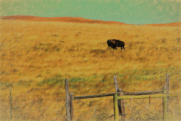 Digital Art - Lone Buffalo by Rusty R Smith
