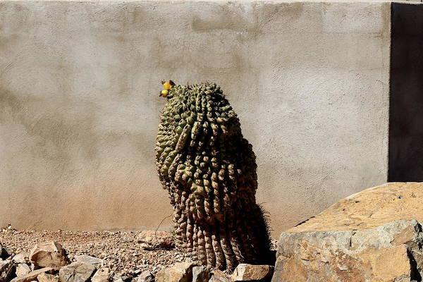 Photograph - Lone Cactus In Sepia Tone by Colleen Cornelius