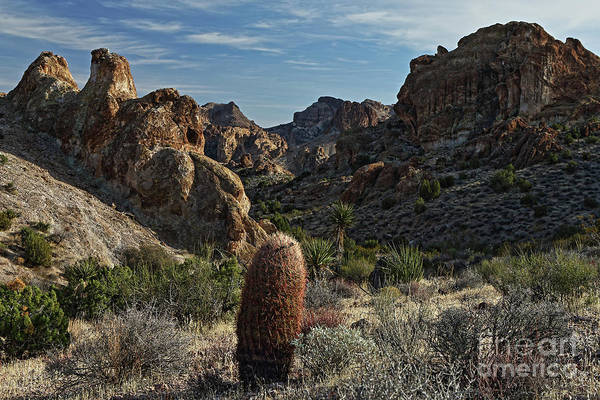 Wall Art - Photograph - Lone Cactus by Rick Mann