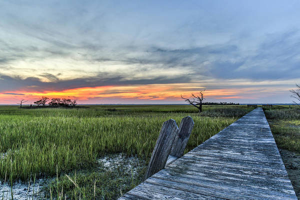Photograph - Lone Cedar Dock - Dewees Island Sc by Donnie Whitaker