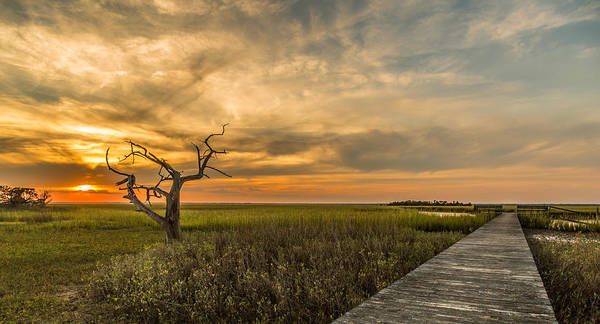Photograph - Lone Cedar Dock Sunset - Dewees Island by Donnie Whitaker