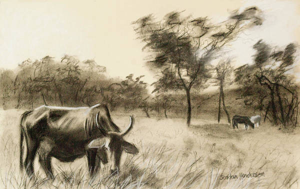 Grass Field Drawing - Lone Cow Grazing by Jordan Henderson