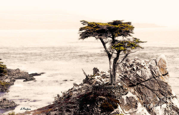 Monterey Cypress Photograph - Lone Cypress At Sunset by Linda  Parker
