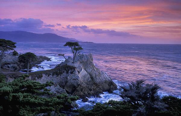 Monterey Cypress Photograph - Lone Cypress by Christian Heeb