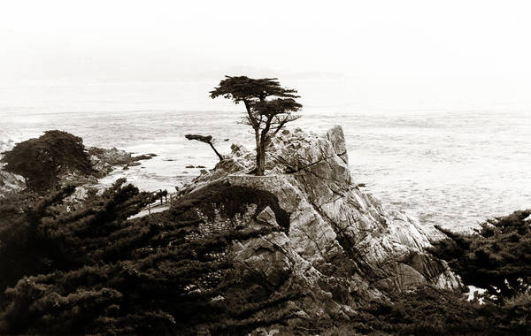 Ico Wall Art - Photograph - Lone Cypress by Marilyn Hunt