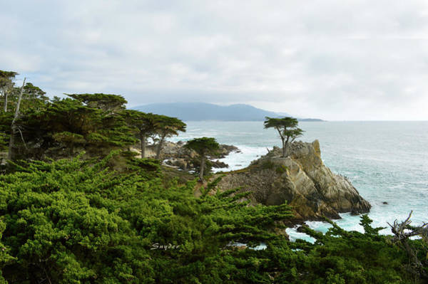 Photograph - Lone Cypress Monterey California by Floyd Snyder