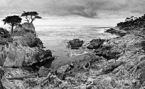 Wall Art - Photograph - Lone Cypress Panorama by Jamie Pham