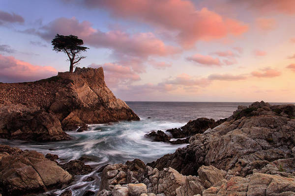 Monterey Cypress Photograph - Lone Cypress Sunset by Katherine Gendreau
