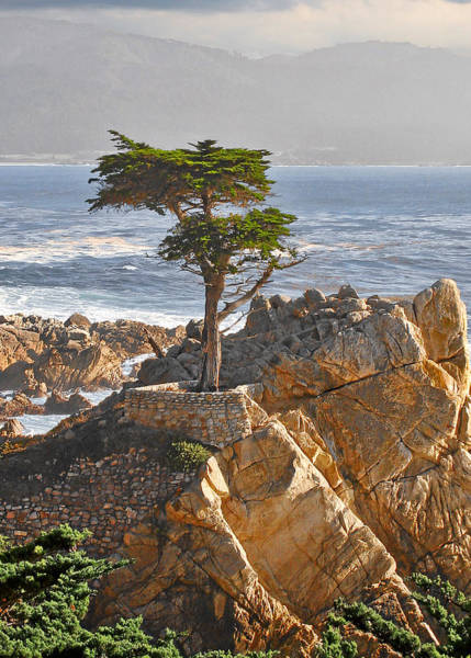 Cloudy Photograph - Lone Cypress - The Icon Of Pebble Beach California by Christine Till