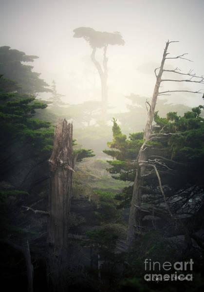 Photograph - Lone Cyprus Tree by Craig J Satterlee