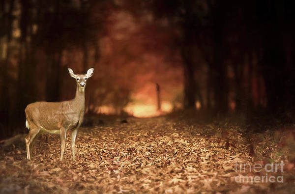 Wall Art - Photograph - Lone Doe by Darren Fisher
