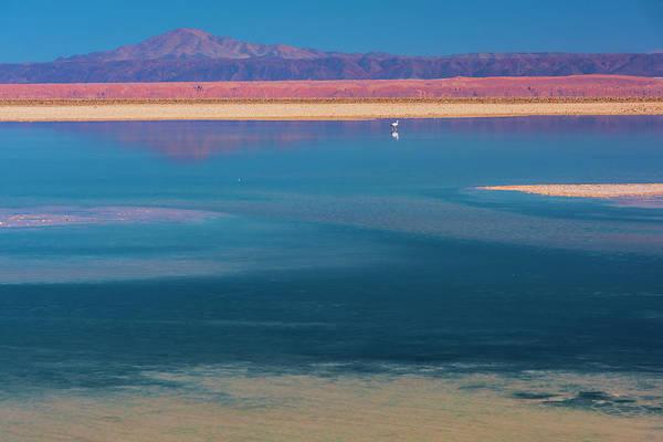 Salar De Atacama Photograph - Lone Flamingo by Christian Heeb