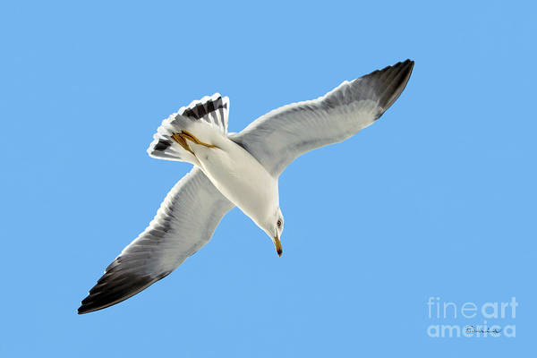 Photograph - Lone Florida Seagull On Beach Patrol 727 by Ricardos Creations