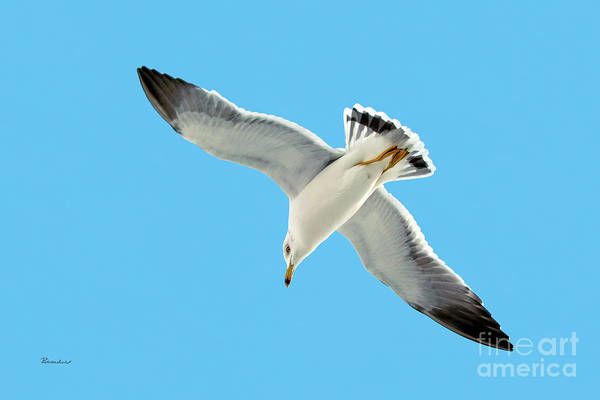 Photograph - Lone Florida Seagull On Beach Patrol 727b by Ricardos Creations