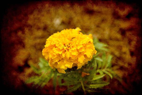 Photograph - Lone Flower by Milena Ilieva