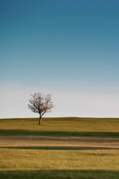 Photograph - Lone Hawthorn Tree I by Helen Northcott