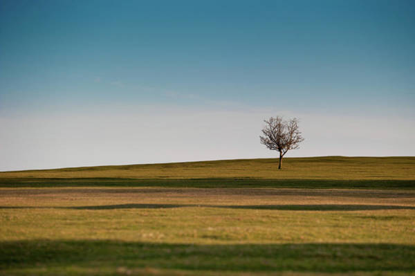Photograph - Lone Hawthorn Tree II by Helen Northcott