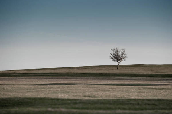Photograph - Lone Hawthorn Tree IIi by Helen Northcott