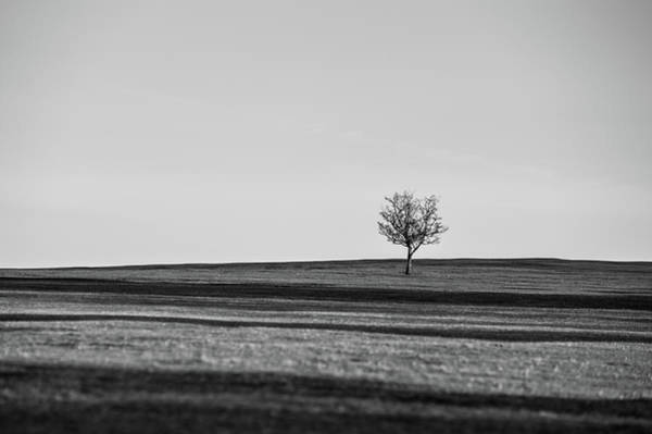 Photograph - Lone Hawthorn Tree Iv by Helen Northcott