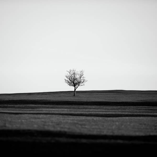 Photograph - Lone Hawthorn Tree V by Helen Northcott