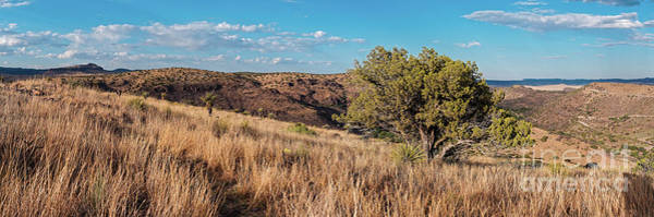Wall Art - Photograph - Lone Juniper And Yucca High In Davis Mountains State Park - Overlooking Limpia Canyon - Fort Davis  by Silvio Ligutti