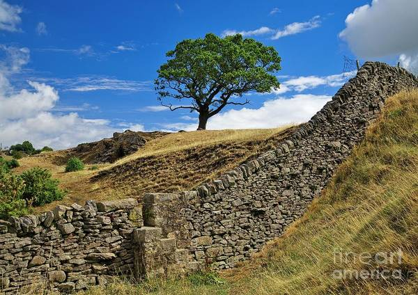 Photograph - Lone Moorland Tree In Yorkshire Dales by Martyn Arnold