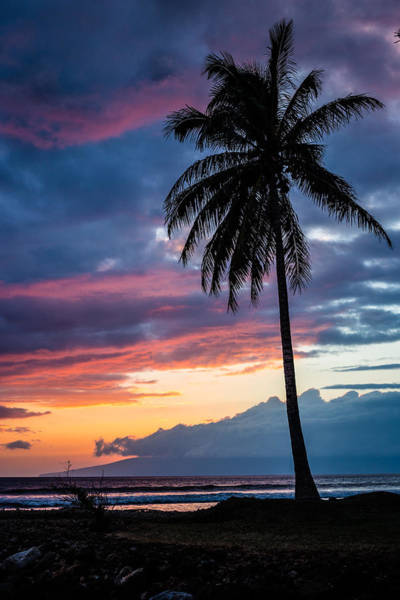 Maui Sunset Wall Art - Photograph - Lone Palm by Drew Sulock
