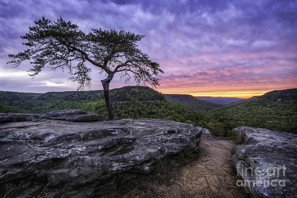 Wall Art - Photograph - Lone Pine by Anthony Heflin