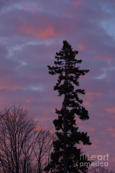 Photograph - Lone Pine At Sunrise by Charles Owens