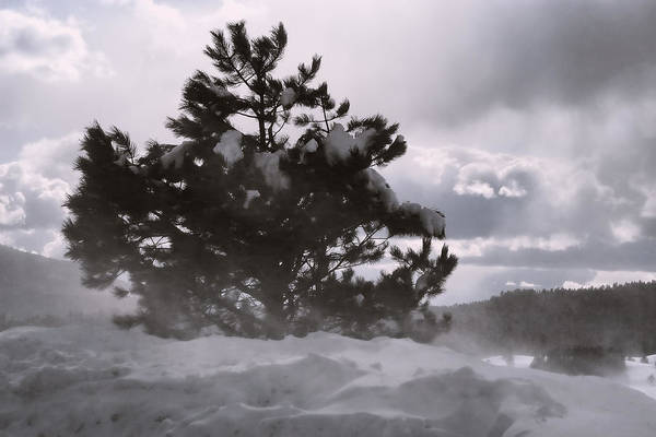 Photograph - Lone Pine by Becky Titus