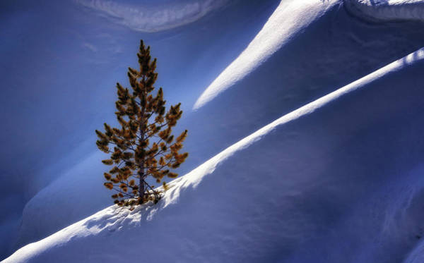 Photograph - Lone Pine by Nicholas Blackwell