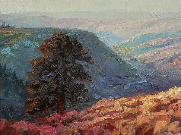 Pines Wall Art - Painting - Lone Pine by Steve Henderson