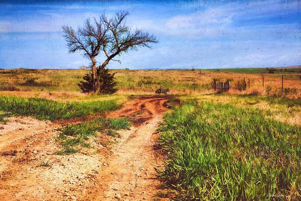 Photograph - Lone Prairie Tree by Anna Louise
